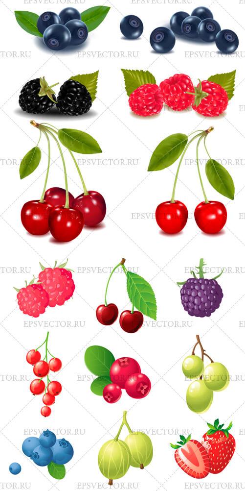 Клипарт ягоды в векторе: epsvector.ru/330-yagody-v-vektore.html
