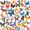 Бабочки в векторе