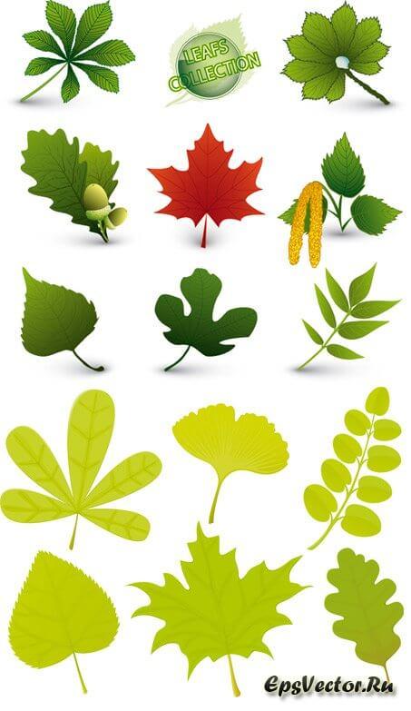 Листья в векторе