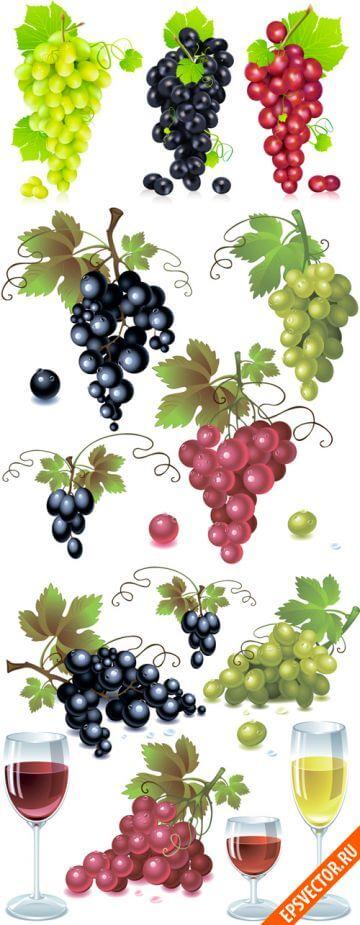 Виноград в векторе