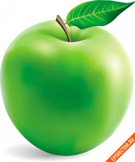 Яблоко в векторе