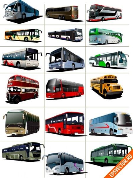 Автобусы в векторе