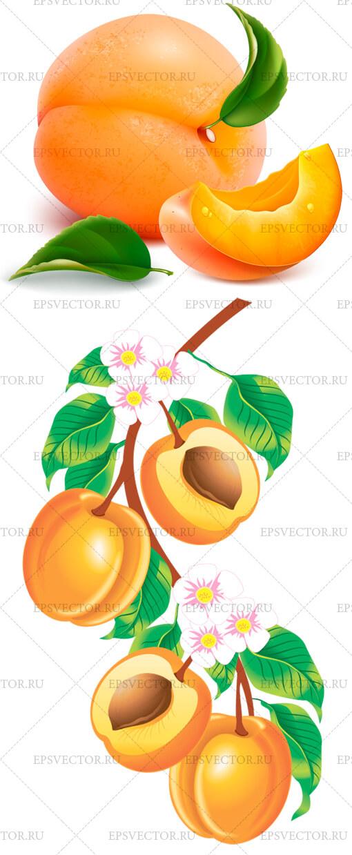 Персики в векторе