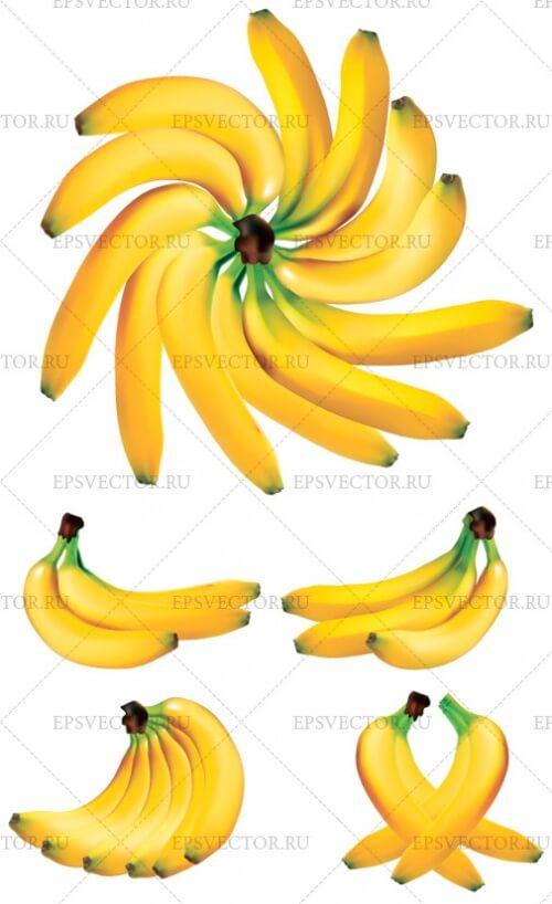 Клипарт бананы в векторе