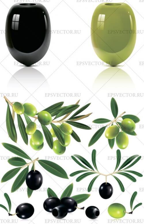 Клипарт оливки в векторе