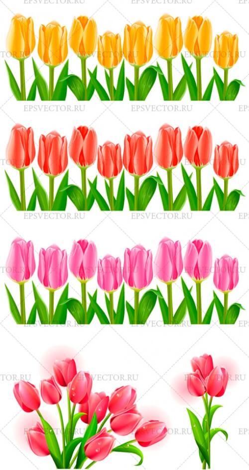 Клипарт тюльпаны в векторе