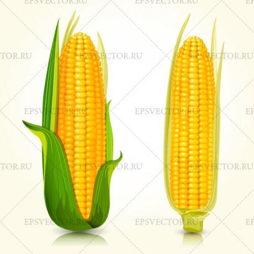 Кукуруза в векторе